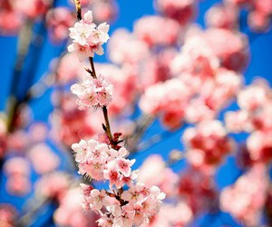 spring, flowers, and beautiful image