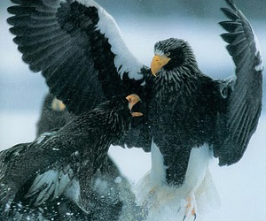 Battles, eagles, and nature image