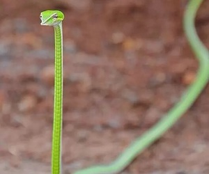 funny, shoelace, and snake image