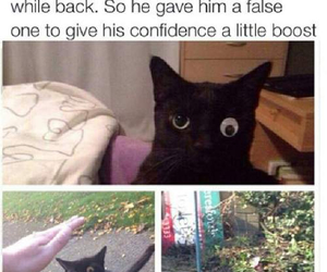 cat, funny, and eye image
