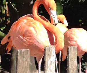 beautiful, sobeautiful, and flamingo image