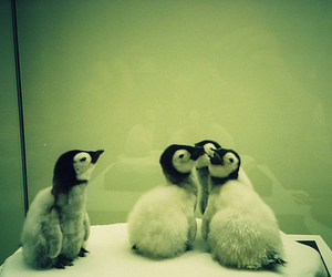 animals, forever alone, and cute image