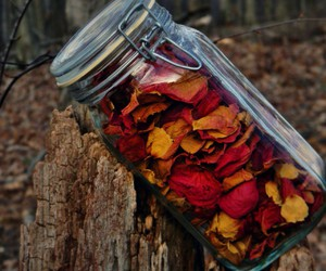 beautiful, forest, and petals image