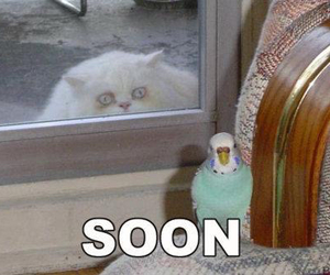 cat and soon image