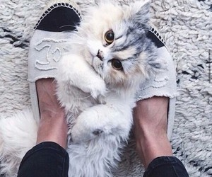 cat, chanel, and animal image