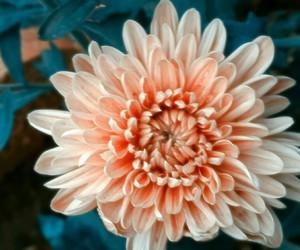 flower, orange, and white image