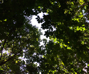 beautiful, forest, and leaves image