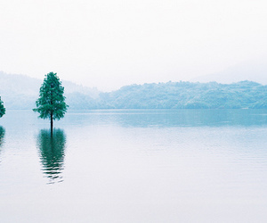 tree, nature, and water image