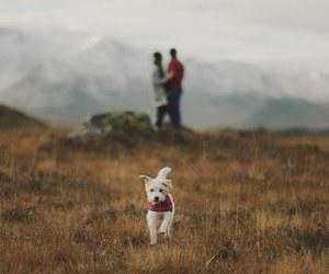 couple, dog, and nature image