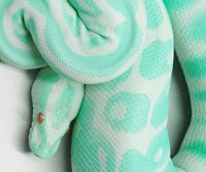 snake, pink, and animal image