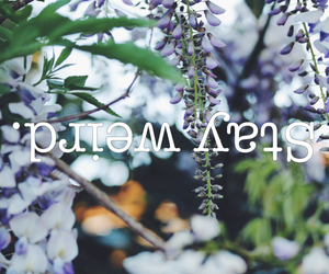 background, flowers, and purple image