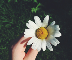 cool, daisy, and grunge image