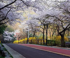 korea, pretty, and seoul image