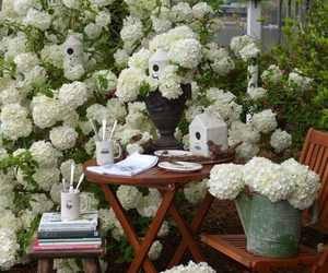 hydrangeas and white image