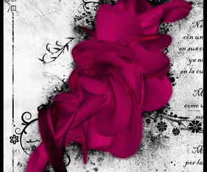 pink and swirls image