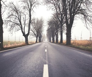 road and tree image