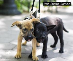 bffs and puppies image