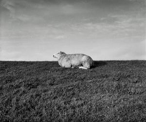 animal, black and white, and coast image
