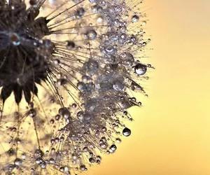 beautiful, flowers, and dandelion image