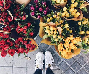 flowers, tulips, and adidas image