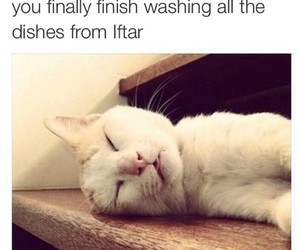 cat, patience, and iftar image