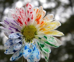 art, colerful, and flower image