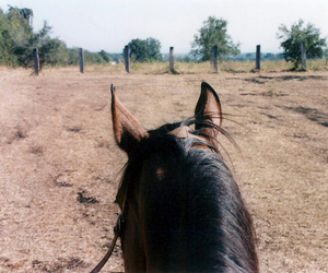horses and ride image