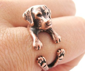 dogs, rings, and jewelry image