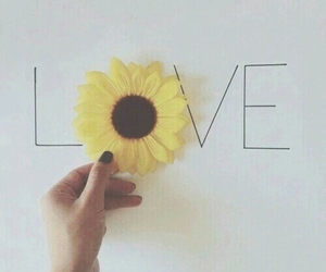 pretty, sunflower, and love image