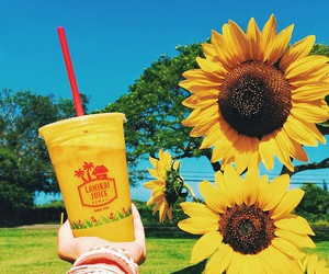 summer, sunflower, and flowers image