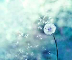 dandelion and photography image
