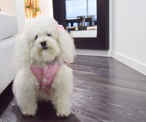 animal, coat, and dog image