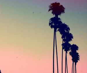 coconut, palm trees, and phone case image