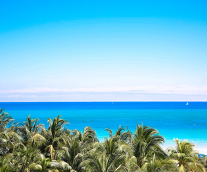 inspiration, ocean, and palm tree image