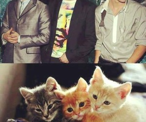 harry potter, cat, and tom felton image