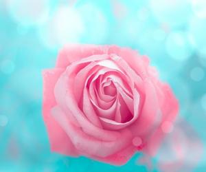 aqua, pink, and rose image
