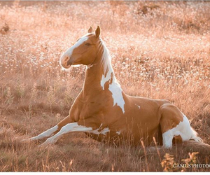 horse, equestrian, and love image