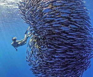 fish, sea, and animal image