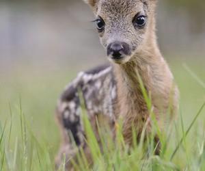 animal, baby animal, and bambi image