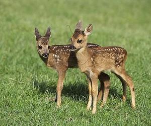animal, baby animal, and sweet image