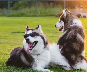 animal, cool, and dogs image