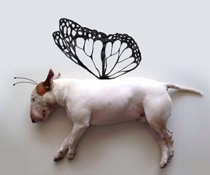 butterfly, dog, and cosplay image