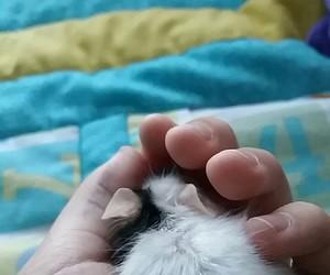 adorable, furry, and animal image