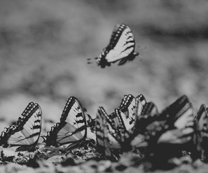 black and white, butterfly, and photography image