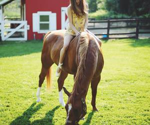 horse, girl, and brandy melville image