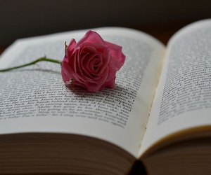 book, rose, and beautiful image