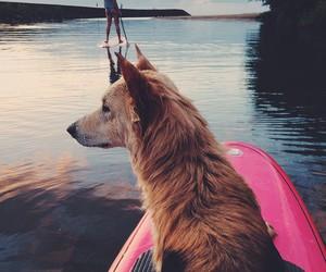 animal, lake, and summer image
