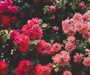 garden, rose, and bahçe image