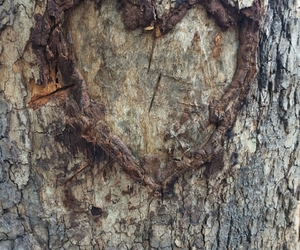 carved, heart, and nature image