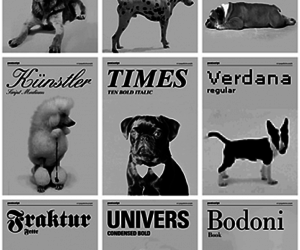 dog, font, and typography image